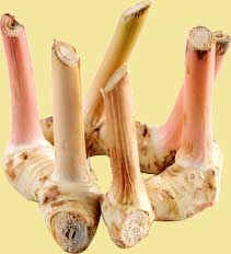Picture from http://www.hub-uk.com/vegetables/galangal.htm